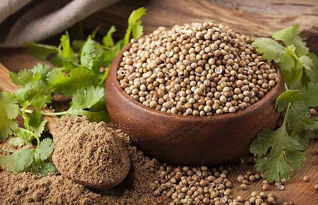 Is Coriander Good For Weight Loss
