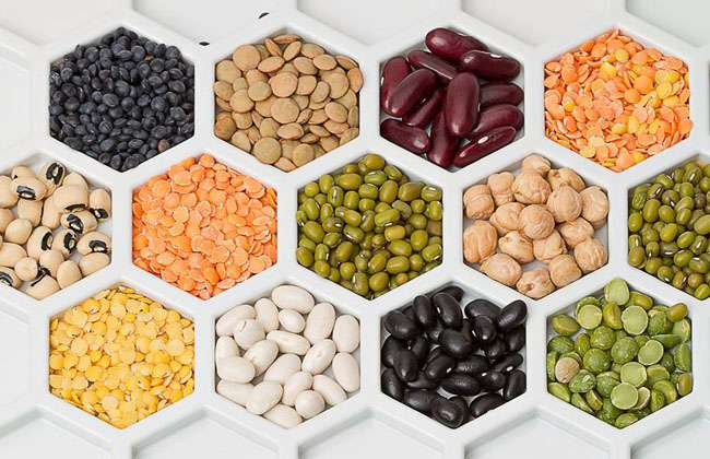 Pinto Beans Weight Loss