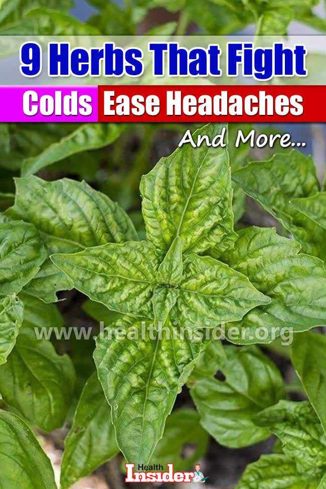 Home Remedies for Cold and Headache