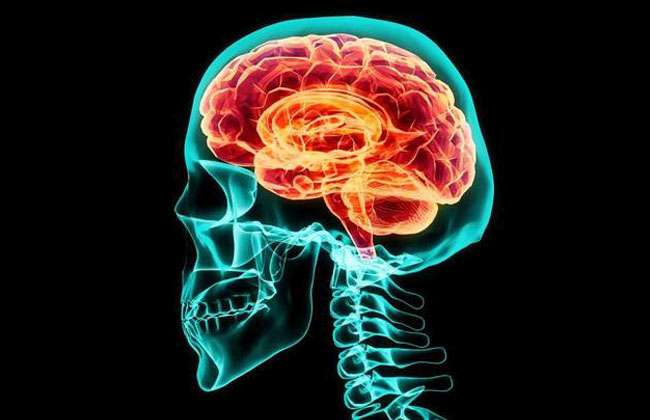 Improve Brain Function and Memory