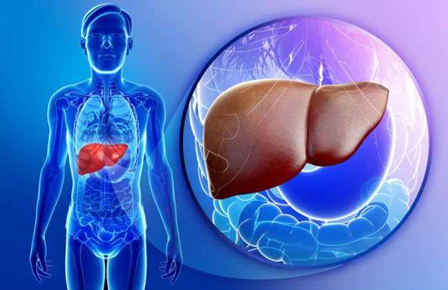 How Long Can You Live without A Liver Transplant