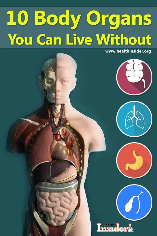Here are 10 human body organs you can survive without and the complications that occur after their removal. #humanorgans #healthproblems