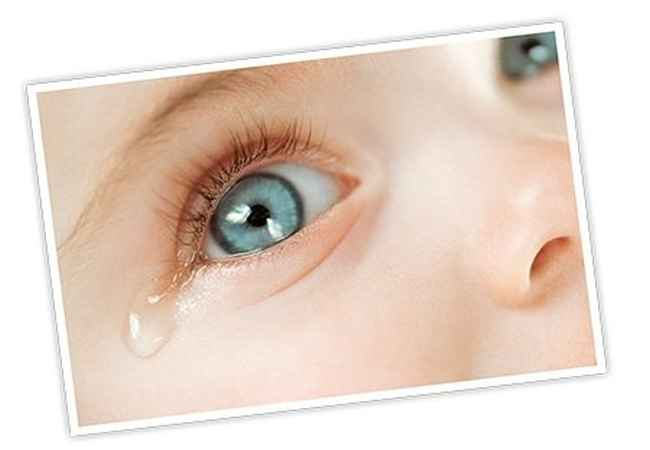 Baby Tears Facts