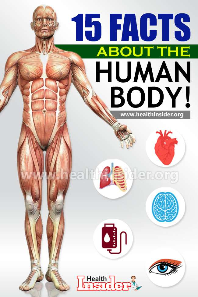 Here, take a look at 15 amazing and intriguing facts about human body. #interestingfacts #humanbody